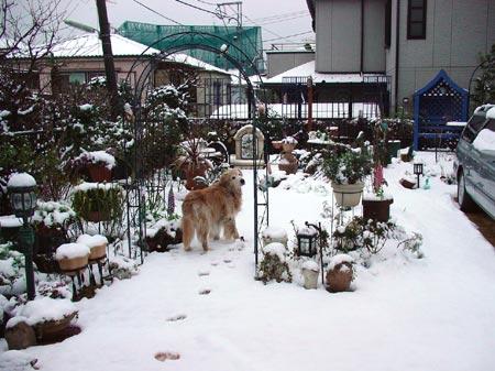 yuki-niwa-1
